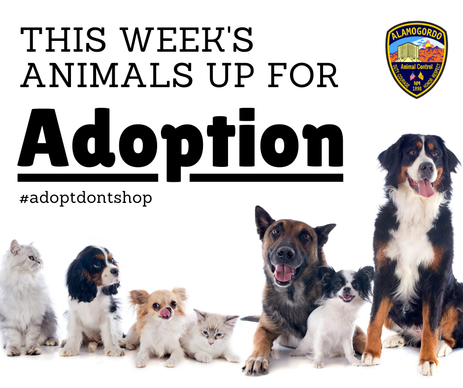 Adoption Album Graphic
